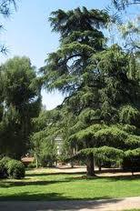 arbre-parc-nice