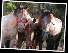 ferme-pedagogique-alpes-maritimes-chevres-chevaux