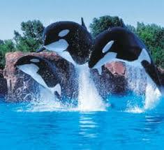durée rencontre dauphin marineland