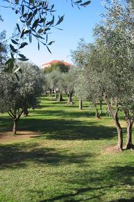 parc-cimiez-nice-oliviers-fete-mai