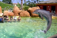 Duree rencontre dauphin marineland