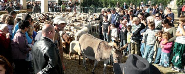 rocheville-campagne-animaux-ferme-sortie-famille