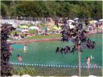 avis-bassin-biologique-roquebilliere-piscine-sortie