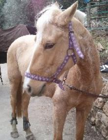 poney-centre-equestre-loubiere-famille-balade