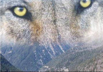 parc-alpha-loup-vesubie-boreon-famille