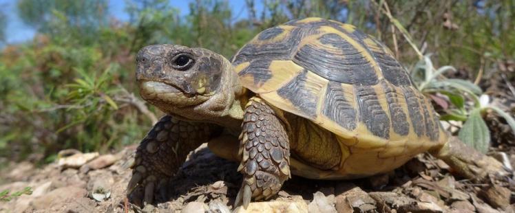 village-tortues-carnoules-var-horaires-tarifs