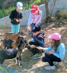 ferme-pedagogique-graines-fermiers-visite-famille