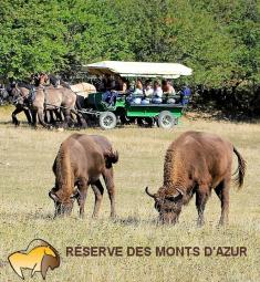 sortir-06-reserve-biologique-monts-azur-bisons