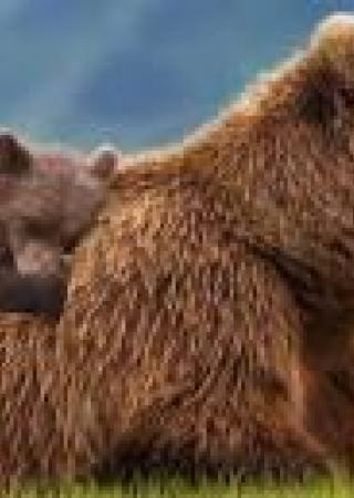 grizzly-film-cinema-avis-critiques