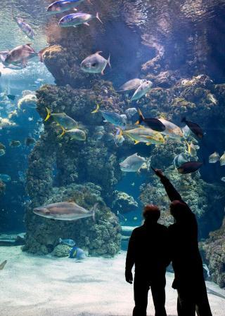 musee-oceanographique-monaco-horaires-tarifs-avis