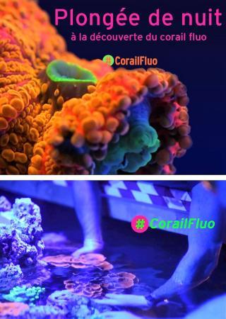 plongee-corail-fluorescent-musee-oceanographique-monaco