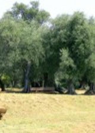 parc-estiennes-orves-nice-famille-enfants