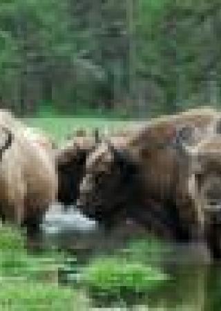 avis-reserve-biologique-monts-azur-parc-animaux