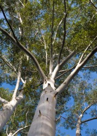 fete-champetre-eucalyptus-quartier-juan-pins