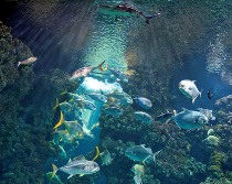 musee-oceanographique-monaco-horaires-tarifs-animations