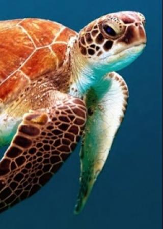 odysee-tortues-marines-musee-oceanographique-monaco