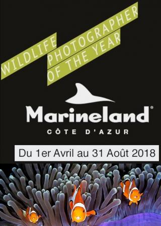 marineland-exposition-photo-wildlife-photographer-year