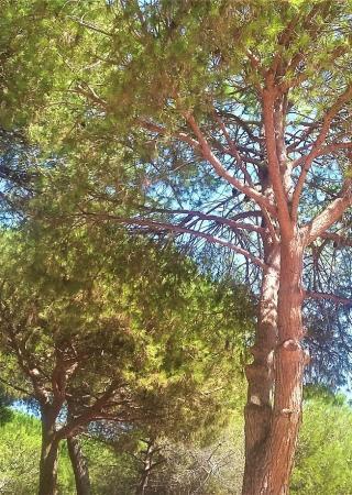 parc-pinede-juan-les-pins-famille