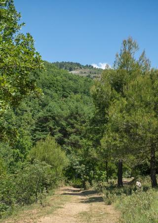 parc-roquevignon-hauteurs-grasse-route-napoleon